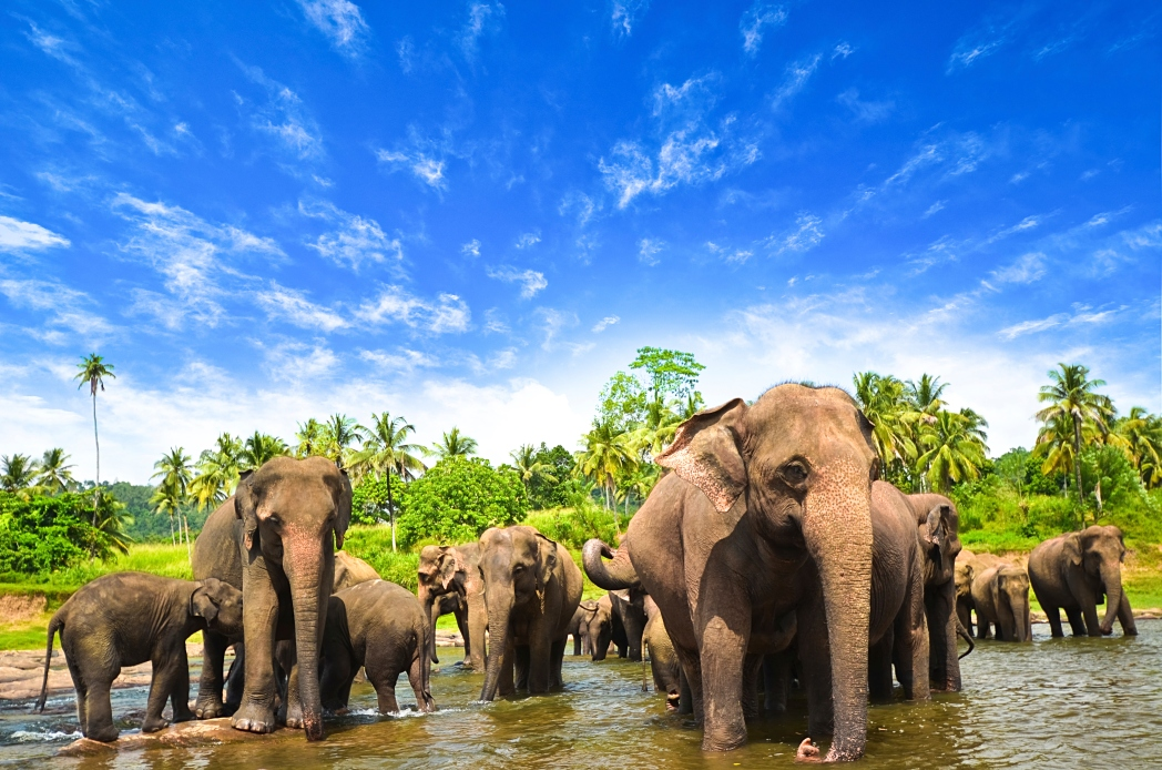Ucuz Sri Lanka Uçak Biletleri