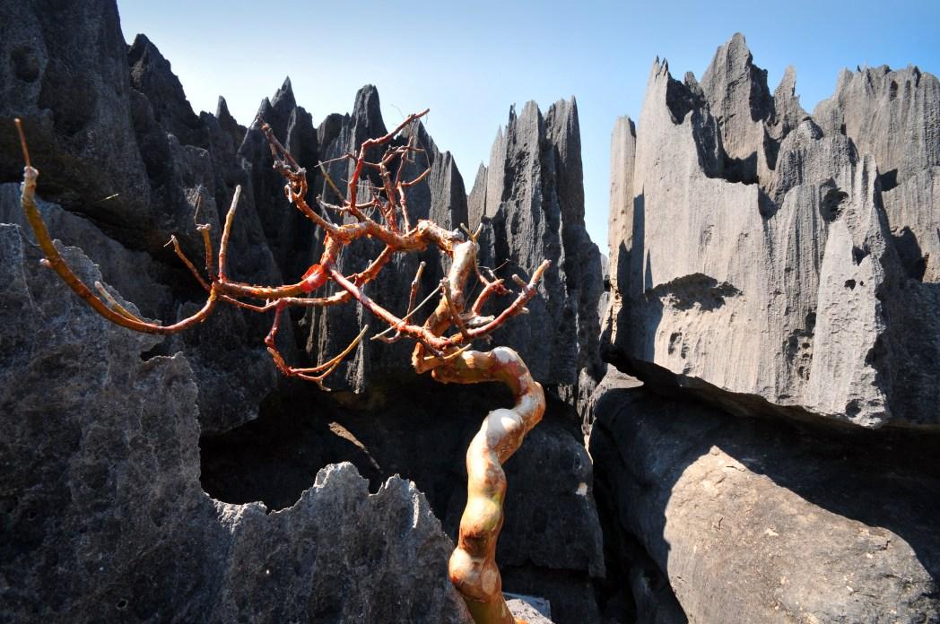 Tsingy de Bemaraha Milli Parkı Madagaskar